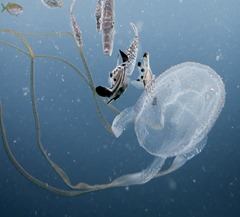 The box jellyfish 28582