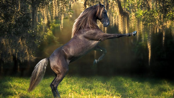 beautiful horse wallpaper