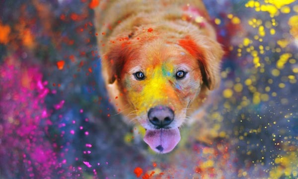 dog explosion of colors wide wallpaper