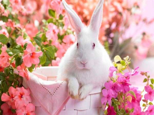nice rabbit in flowers